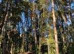 parcela-con-bosque-en-villarrica-sur-de-chile