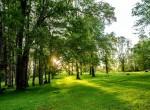 parcelas-con-bosque-en-villarrica-con-condominio-seguro-luz-y-agua-4.jpg