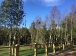 casa-con-bosque-en-pucon-propiedades-en-pucon-3.jpg